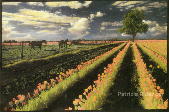 Patricia Ridenour_Skagit Vallery Tulip Field_Washington State Arts Commission Collection