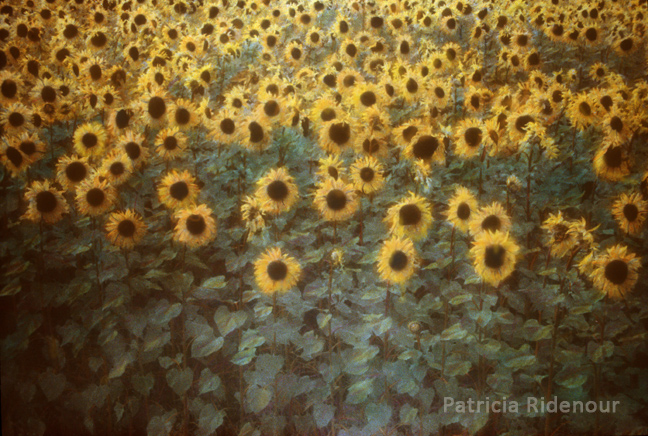 Patricia Ridenour_Sunflowers_France_Washington state arts commission_Permenent